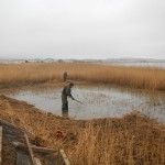 After Reed Cutting - Habitat Enhancement
