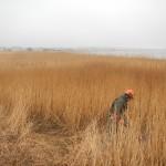 Before Reed Cutting - Habitat Enhancement