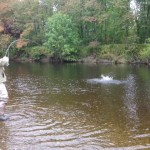 Murdo Crosbie, Cowhill, 8lb salmon released